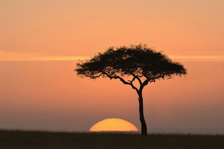 Photo of an Acacia tree at sunset in Africa