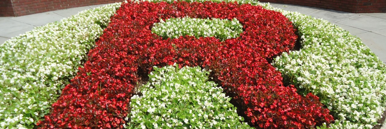 "Photo of Rutgers ""R"" in the grass"