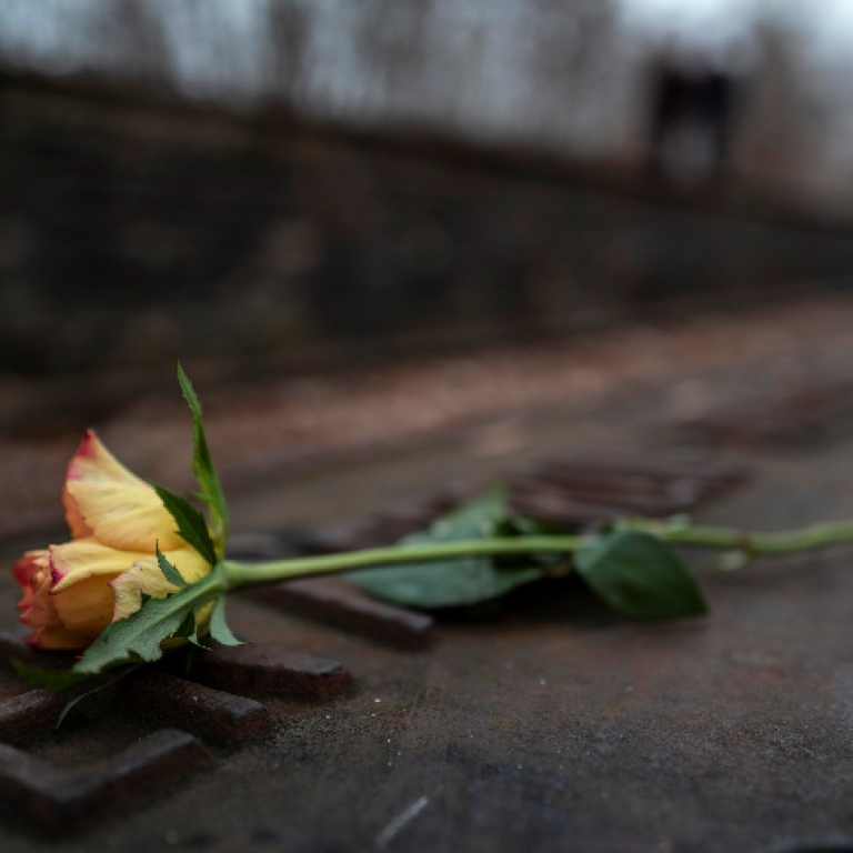 Yellow rose on train tracks